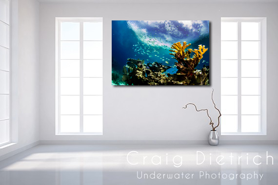 "40""x60"" KEYS CORAL LIMITED EDITION"